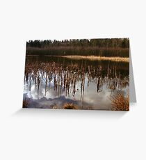 Trees of Reflection Greeting Card