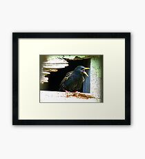 Hey!!! A Little Privacy Would Be Nice!!! - Starling - NZ Framed Print