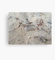 Gum leaf in sand Canvas Print