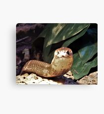 The Monocled Cobra Canvas Print