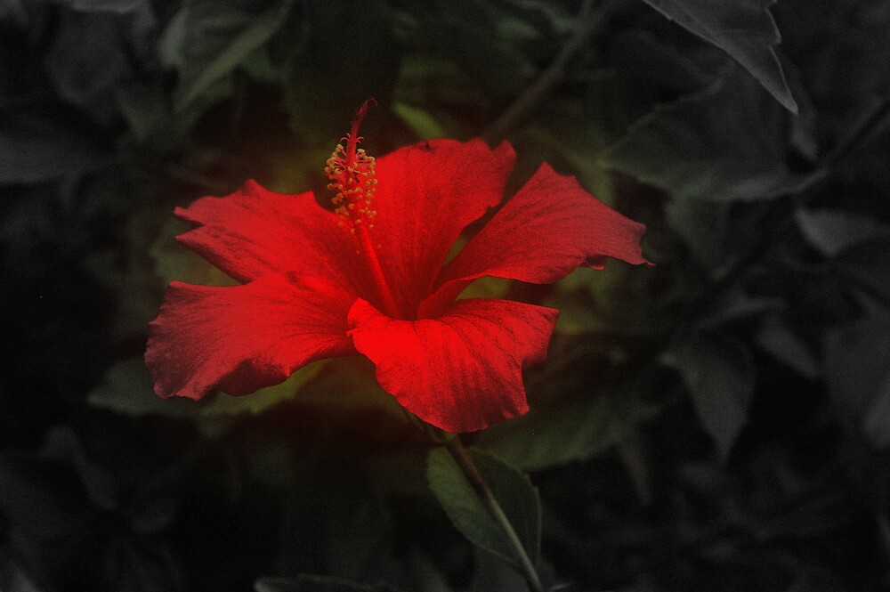 Flower by Chris Popa
