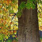 autumn light by jayview