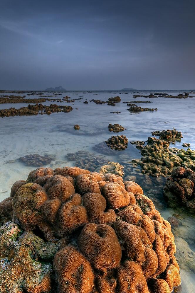Reef Tide by Robert Mullner