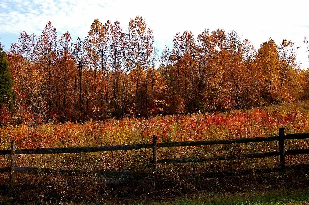 Autumn Farmland by tomfowler