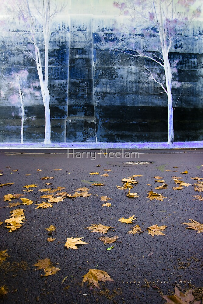 Fall Wall  by Harry Neelam