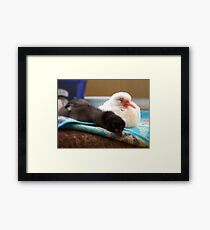 Away... Away With The Faeries... - Dove & Chick - NZ Framed Print