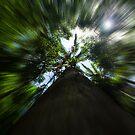 Up the Tree by Skye Harris