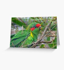 Could I Win A Beauty Contest? - Musk Lorikeet - NZ Greeting Card