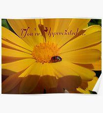 You're Appreciated - Ladybird - NZ Poster