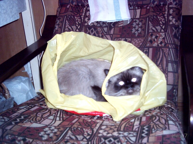 cat in a carrier bag by elena7