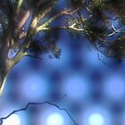 A tree  ...  straight from the camera by myraj