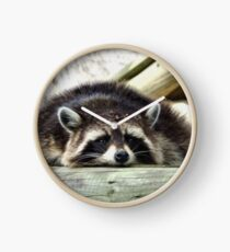 Tired Raccoon Clock