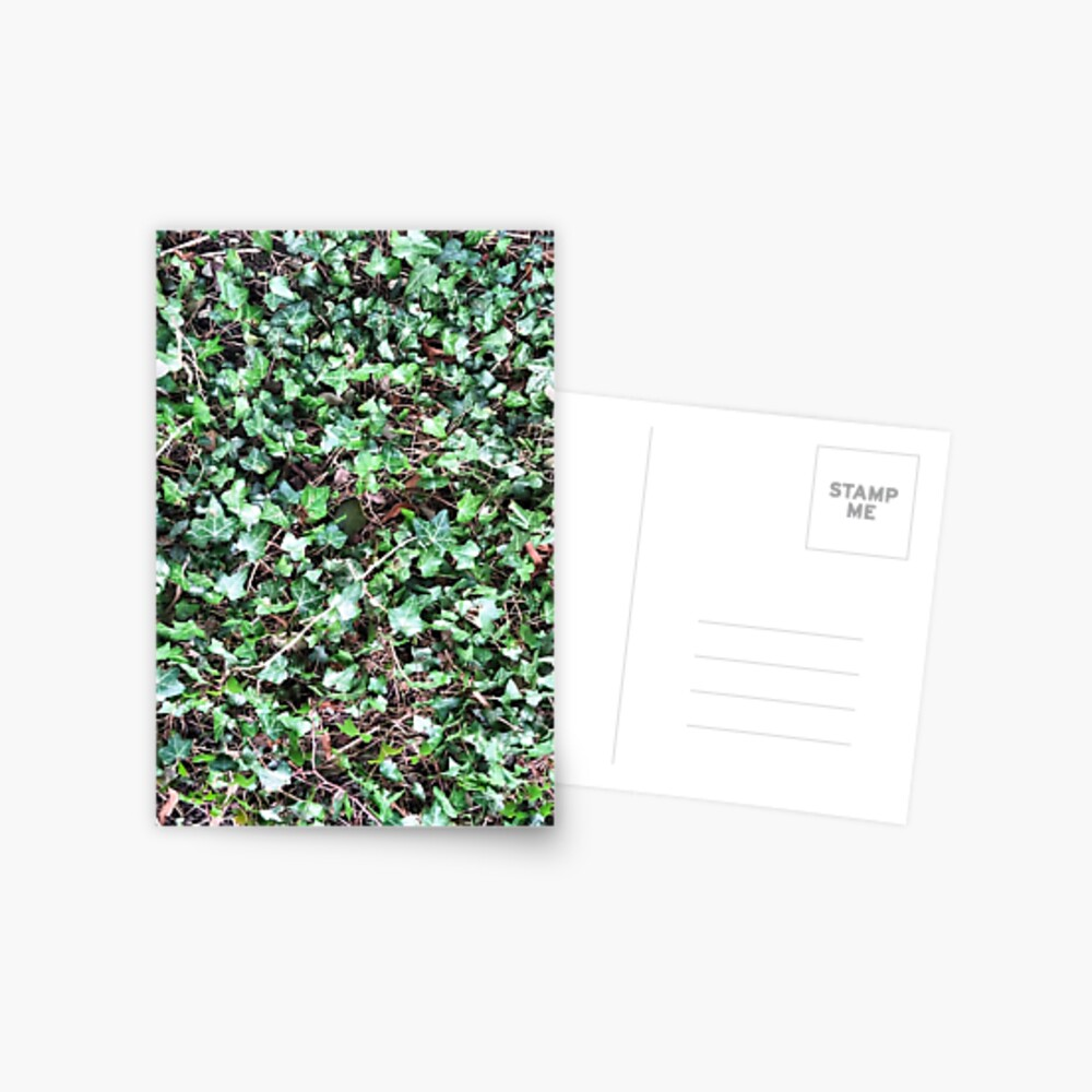 Tangled Ivy Bed Postcard