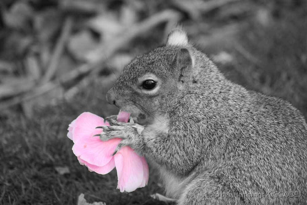 Squirrel eats Flower by Lord Lee Hemmings KtGC.OBE.