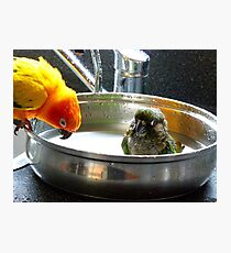 It's Not A Bird Bath... It's A Pan Bath LOL... - Conures - NZ Photographic Print
