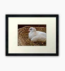 """Nothing Beats A """"Rest In A Nest!""""... White Dove - NZ Framed Print"""