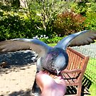 Great... A Hand Of Food!!!! - Pigeon - Dunedin by AndreaEL