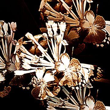 Butterfly Hideout by bribiedamo