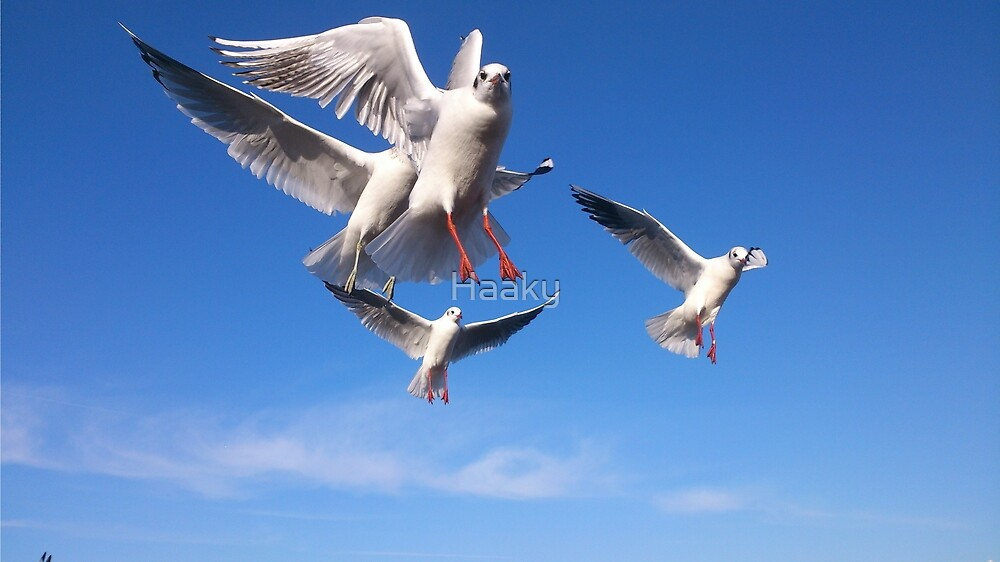 Swarm of Seagulls by Haaky