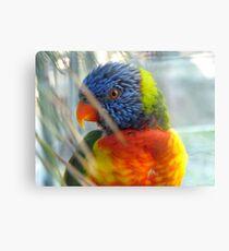 Do My Colours Influence Your Mood! - Rainbow Lorikeet - NZ Canvas Print