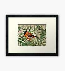 I Have A Fiery Energy - Red Siskin - NZ Framed Print