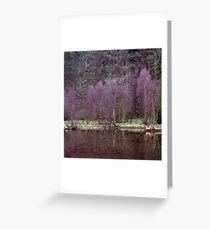 Birch trees, Ennerdale Greeting Card