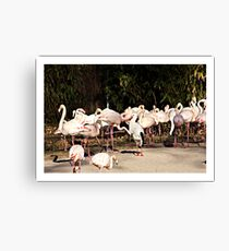 Lunch guest Canvas Print