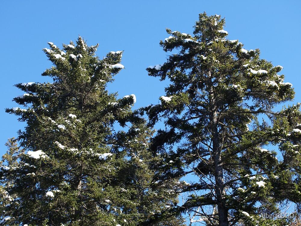 NC my winter trees by Albert1000