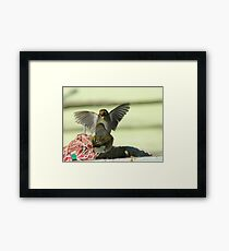 I'm Telling You..That Worm Was At Least This Big!! - Silver-Eyes - NZ Framed Print