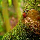 Your Tree, My Mountain by Rebecca Cruz