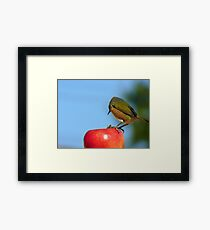 Yes..Yes!! I Know About The Birds & The Bees!!! - Silver-Eye - NZ Framed Print