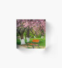 cherry blossom in city park Acrylic Block