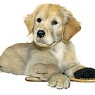 Golden Retriever Puppy with brush by Liane Weyers