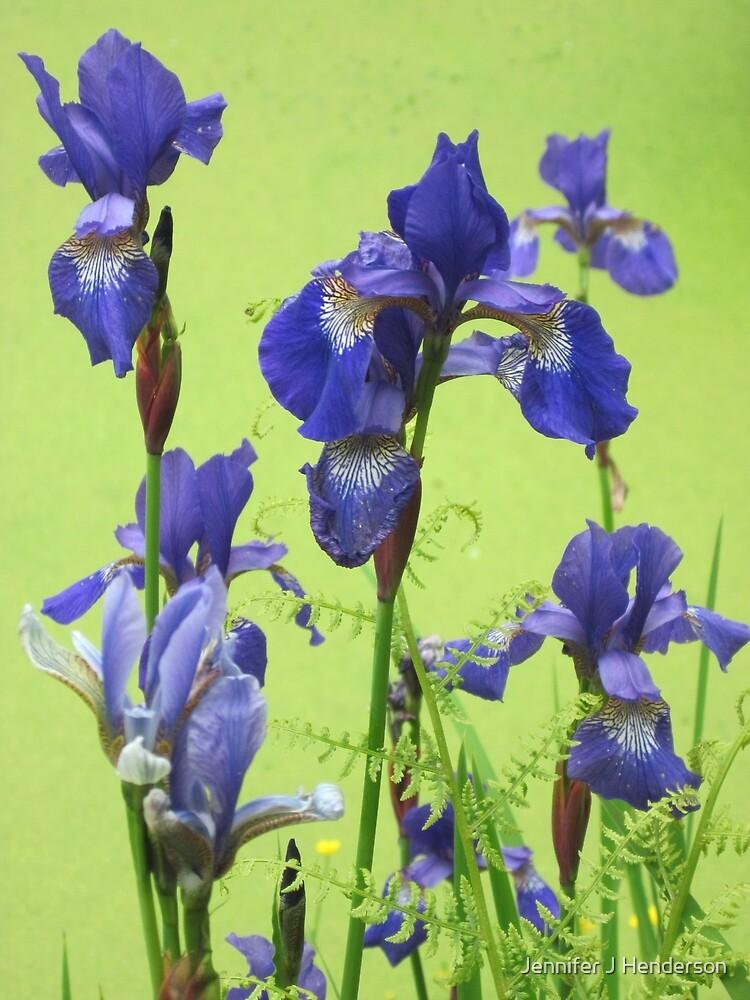 Blue Irises by Jennifer J Watson