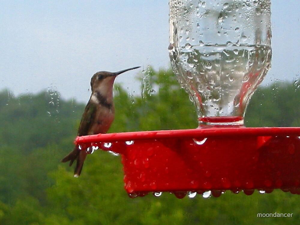 Hummingbird after the rain by moondancer