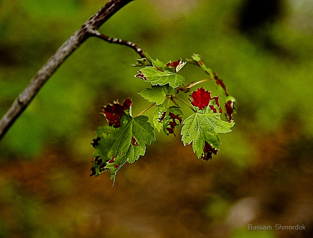 Leaves by Bassam  Shmordok