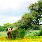 Floral Pastures of Texas by Carolyn Staut