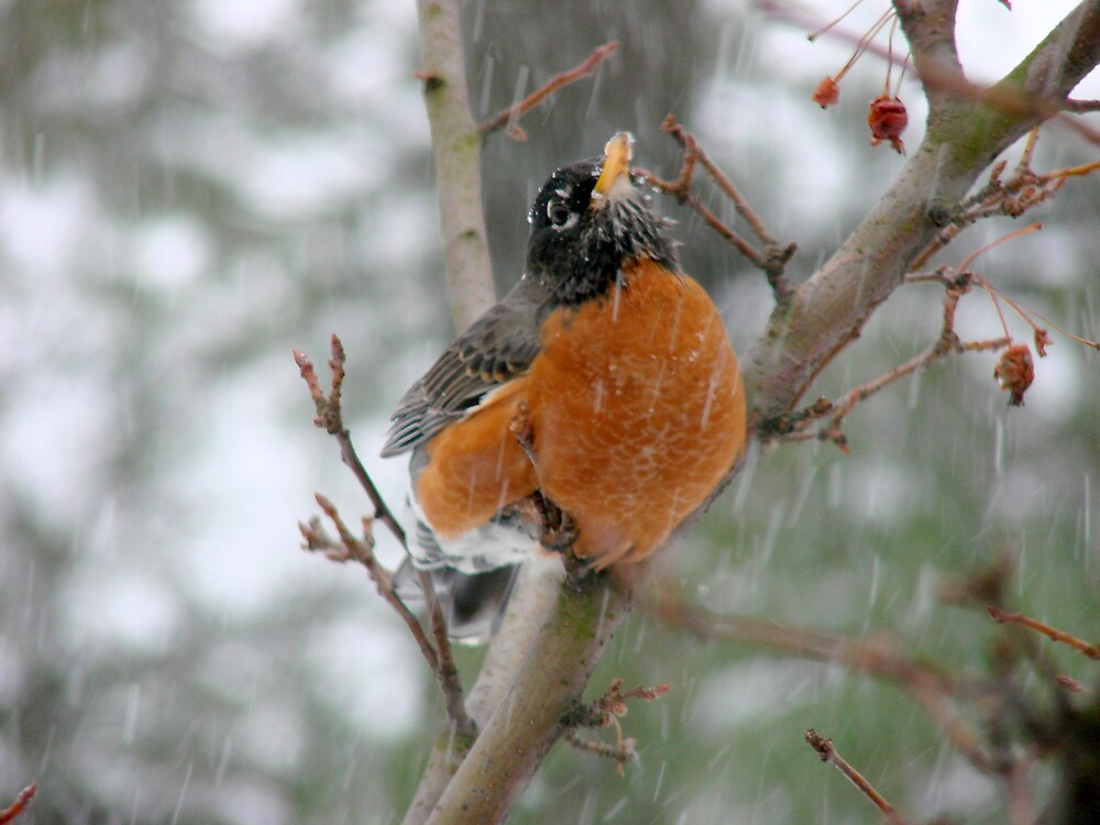 Cold Bird by bellyta