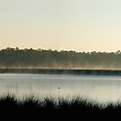 pano-Morning at the Bayou  by Jonicool