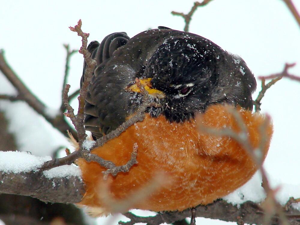 My Bird by bellyta