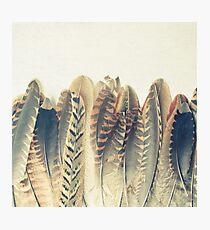Feather Dip Photographic Print