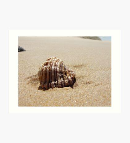 Croajingolong National Park - Shell Art Print