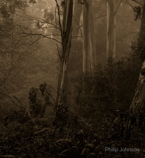 Sepia Times - Mount Wilson  NSW - The HDR Experience by Philip Johnson