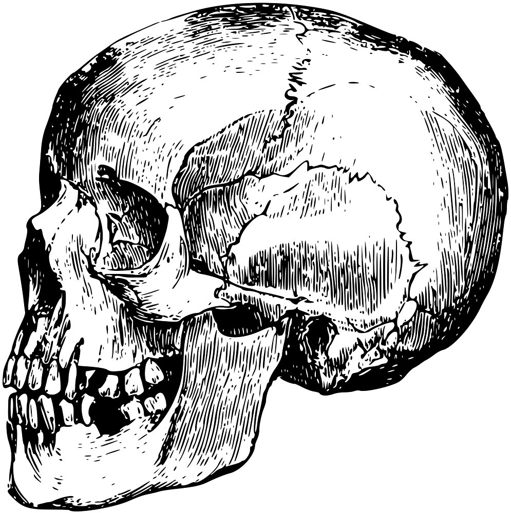 Human Skull From The Side by seriouscereal