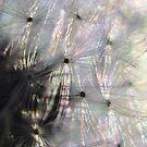 Iridescent Dandelion by farmbrough