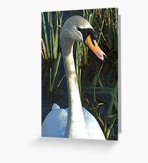 Swan Pool Greeting Card