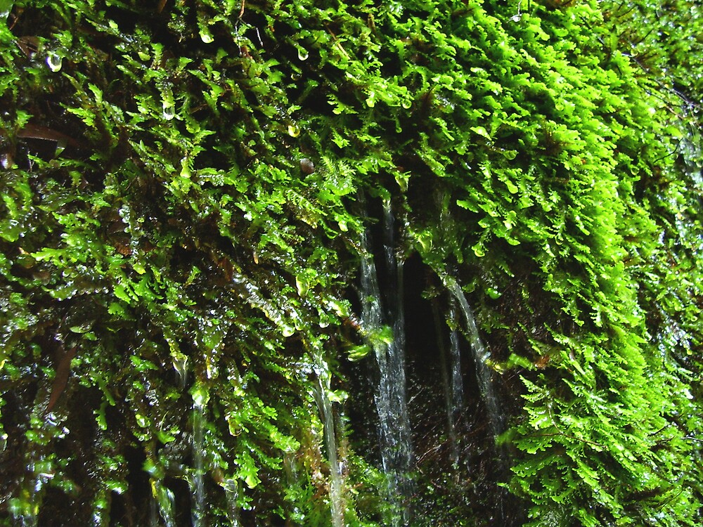 rock wall seepage through the moss by gaylene
