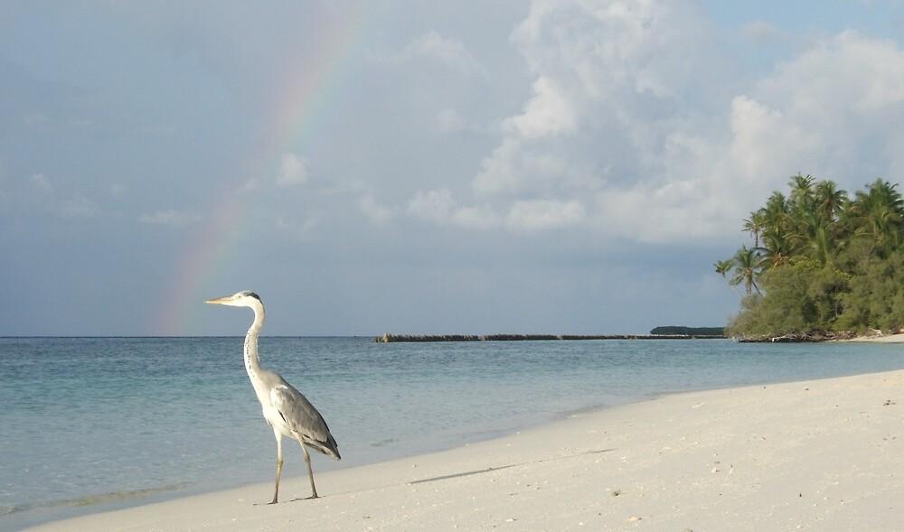 Rainbow Beak by philpace