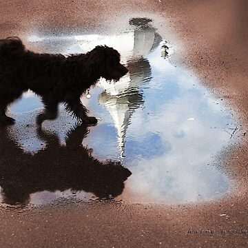 Dog Walking on Water by harryn