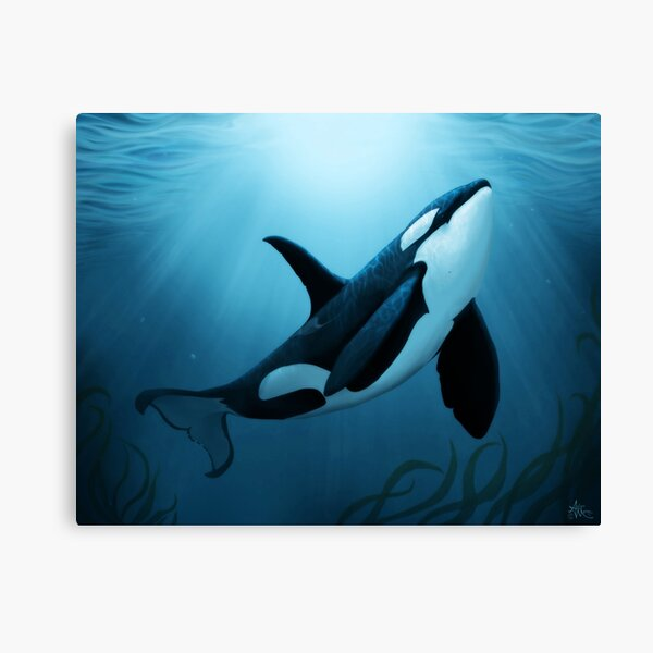 """The Dreamer"" by Amber Marine ~ (Copyright 2015) orca art / killer whale digital painting Canvas Print"